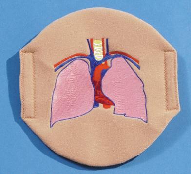 Pulmonary System Overlay